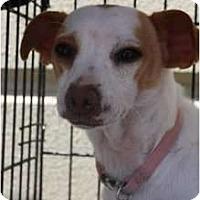 Adopt A Pet :: Nora - Arlington, TX