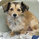 Adopt A Pet :: Paulina