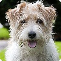 Adopt A Pet :: Mr Paco - Houston, TX