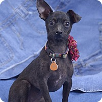 Adopt A Pet :: Minnie - Oklahoma City, OK