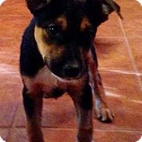 Adopt A Pet :: Rosa - Gainesville, FL