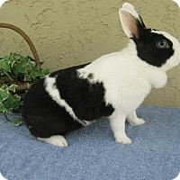 Adopt A Pet :: Adeline - Bonita, CA