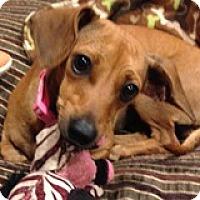 Adopt A Pet :: Kayla Kudzu - Houston, TX