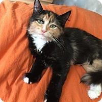 Adopt A Pet :: Clarissa - Hurst, TX