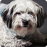 Adopt A Pet :: Fluffy - Thousand Oaks, CA