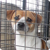 Adopt A Pet :: Ski - Lewisburg, TN