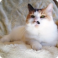 Adopt A Pet :: Hazel - Castro Valley, CA