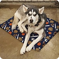 Adopt A Pet :: Navasota - Carrollton, TX