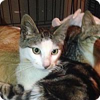 Adopt A Pet :: Lincoln - East Brunswick, NJ