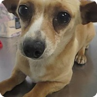 Adopt A Pet :: Winnifred - Lincolnton, NC