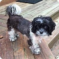 Adopt A Pet :: Oreo - Atlanta, GA