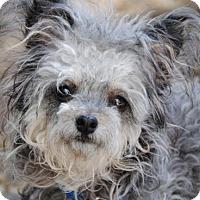 Adopt A Pet :: Pascale - Philadelphia, PA
