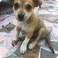 Adopt A Pet :: Haley - MIAMI, FL