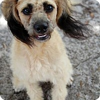 Adopt A Pet :: Jasmine - Bradenton, FL