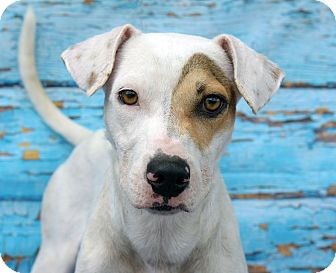 Terrier (Unknown Type, Small) Mix Dog for adoption in LAFAYETTE, Louisiana - BINX