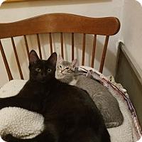 Adopt A Pet :: Homer & Valentine - Walnut Creek, CA