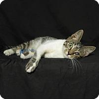 Adopt A Pet :: Iris - Lufkin, TX