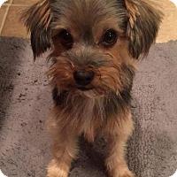 Adopt A Pet :: Squiggy - San Diego, CA