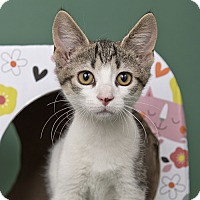 Adopt A Pet :: Stuffing - Wilmington, DE