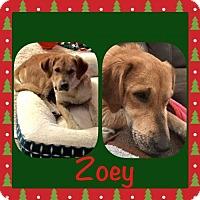 Adopt A Pet :: Zoey - Genoa City, WI