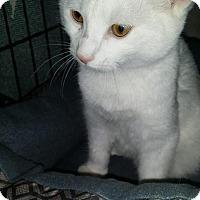 Adopt A Pet :: William - Levelland, TX