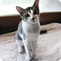 Adopt A Pet :: Max - Mission Viejo, CA