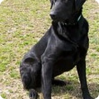 Adopt A Pet :: Zeus - Lewisville, IN