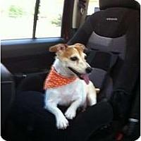Adopt A Pet :: Jayden in Houston - Houston, TX