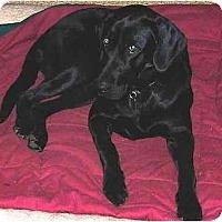 Adopt A Pet :: Emily - Cumming, GA