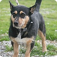 Adopt A Pet :: Roxie - Henderson, KY
