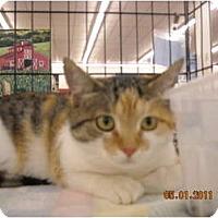 Adopt A Pet :: Butterccup - Riverside, RI