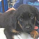 Adopt A Pet :: Wyatt