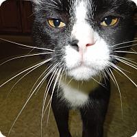 Adopt A Pet :: Spunky - Medina, OH