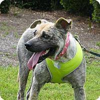Adopt A Pet :: Zani - West Columbia, SC