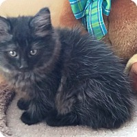 Adopt A Pet :: Bunny - Monroe, NC
