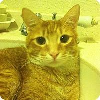 Adopt A Pet :: Noodle - Tampa, FL