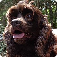 Adopt A Pet :: Stacy - Crump, TN