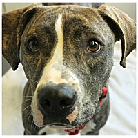 Adopt A Pet :: Ripple - Forked River, NJ