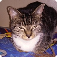 Adopt A Pet :: Aida - Franklin, NH