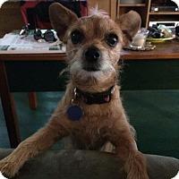 Adopt A Pet :: Sessie - Glastonbury, CT