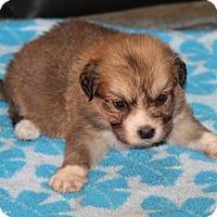 Adopt A Pet :: Tosha - Huntsville, AL