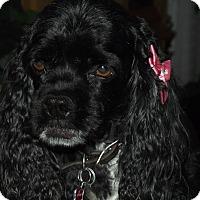 Adopt A Pet :: Gretal - Sacramento, CA