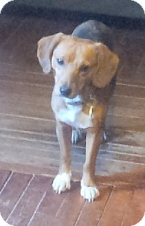 Beagle Mix Dog for adoption in Pardeeville, Wisconsin - Mz Marley