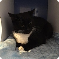 Adopt A Pet :: Solstice - Atlanta, GA