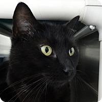 Adopt A Pet :: Athena - Elyria, OH