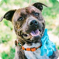 Adopt A Pet :: Josie - Knoxville, TN