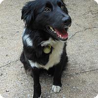 Adopt A Pet :: Alice - Allentown, PA