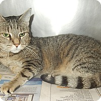 Adopt A Pet :: Leisal - Newport, NC