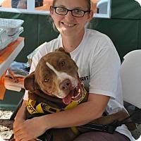 Adopt A Pet :: Gouda - Graniteville, SC