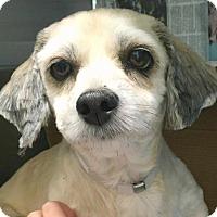 Adopt A Pet :: Brooke-ADOPTION PENDING - Boulder, CO